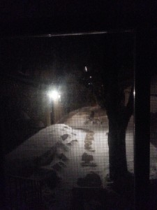 Taken through the door - too cold to even open it for a photo.